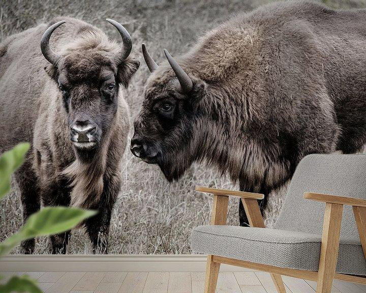 Sfeerimpressie behang: Twee wisenten (Europese bizons) naast elkaar in de Kennemerduinen van Melissa Peltenburg