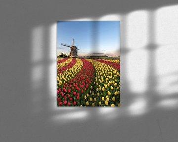 Duo Farbe rot und gelb Tulpen Blumen von Digikhmer