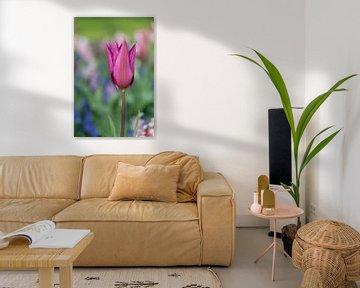 Nahaufnahme einer dunkelbraunen Tulpe von Digikhmer
