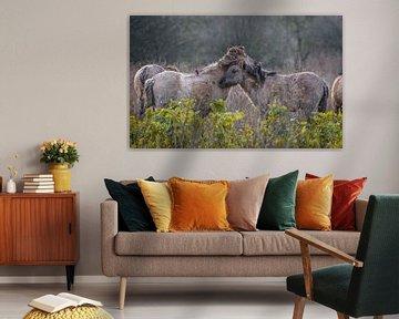 Konik-Pferde von Andy van der Steen - Fotografie