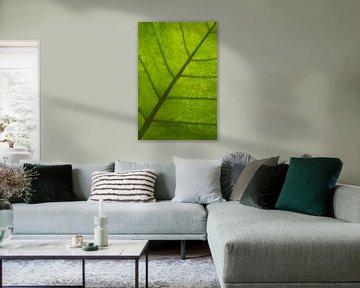 Groen blad van Ronenvief