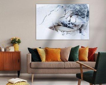 Husky sledehond ingegraven in de sneeuw van Martijn Smeets