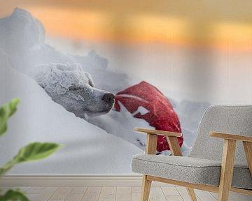 Husky in de sneeuw bij zonsopkomst van Martijn Smeets