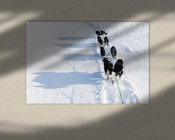 Husky sledeteam volgen pad in de sneeuw