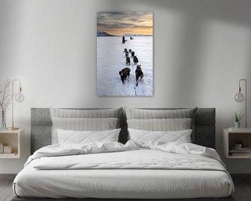 Husky sledeteams over bevroren meer met zonsondergang