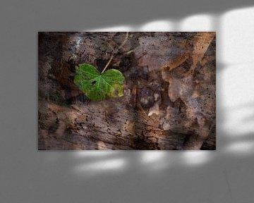 Natur-Kunst 005 von Henk Elshout