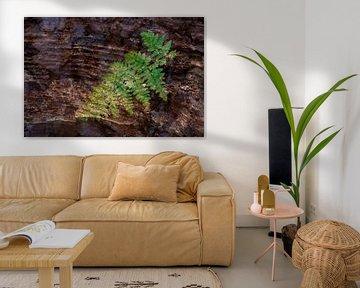 Natur-Kunst 006 von Henk Elshout