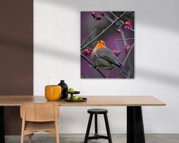Rotkehlchen violett von Marvin Van Haasen