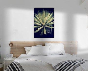 Kaktus von Marieke Bakker