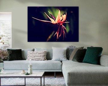 Tropische Blume von Marieke Bakker
