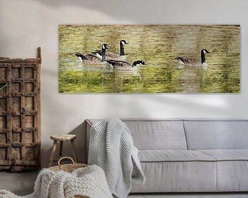 Kanadische Gänse (Panoramagemälde) von Art by Jeronimo