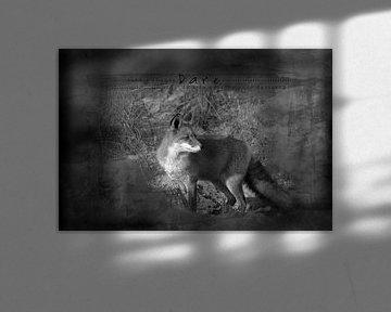 Ein Fuchs in der Spätsommersonne von Carla van Zomeren