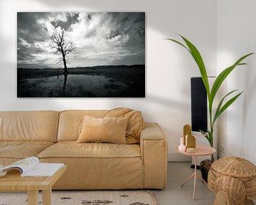 Eenzame boom in Limburgs Heuvelland van Mark Veldman