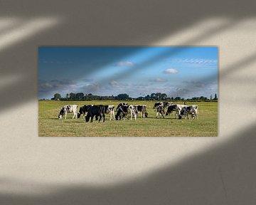 Koeien met meeuwen