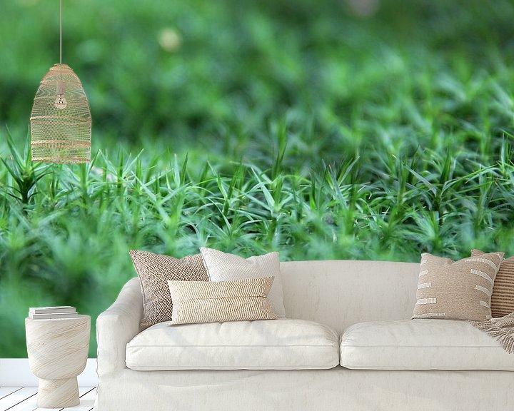 Sfeerimpressie behang: Close-up groene bodembedekking van Sander de Jong
