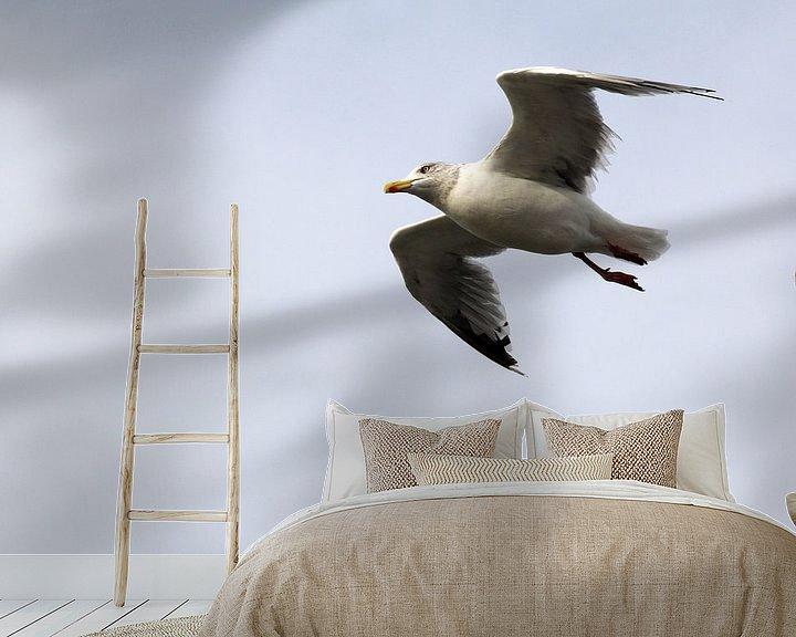 Beispiel fototapete: Möwe von Sander de Jong