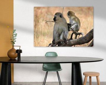 Affen von Roger Hagelstein