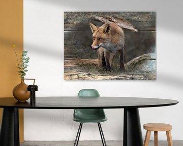 Likkebarende vos op houten achtergrond van Carla van Zomeren