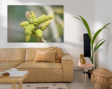 Blütenknospe von Hanneke Bantje