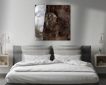Waldkauz von Dennis Bresser