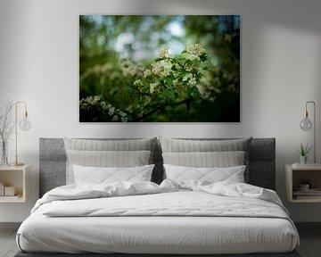Blüte im Wald von Wilko Visscher