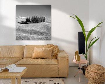 Cirkel van Cipressen in Torrenieri, Toscane, Italië van Henk Meijer Photography