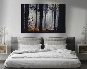 Un matin brumeux dans les bois sur Peschen Photography
