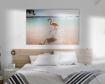 Flamingo wandeling