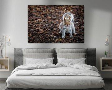 Freches Eichhörnchen auf Hackschnitzelweg von AB Photography