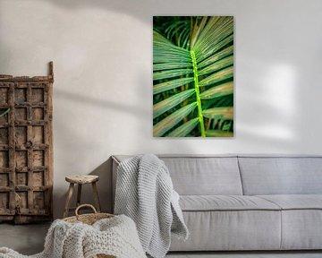 Bambusblatt (Nahaufnahme) von AB Photography