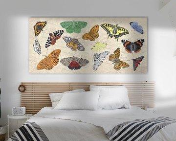 Dagvlinders en nachtvlinder van Jasper de Ruiter