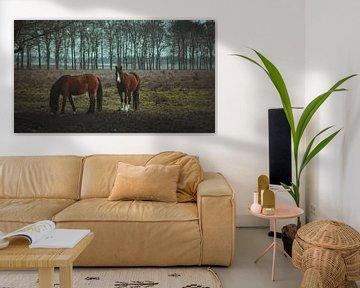 Wildpferde von AciPhotography