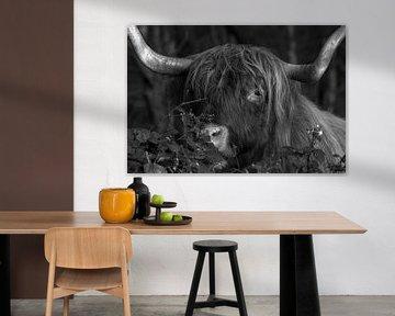 Close-up Schotse Hooglander van Peter Bartelings Photography