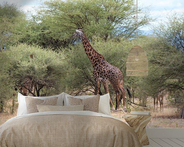 Beispiel fototapete: Giraffen von Roger Hagelstein