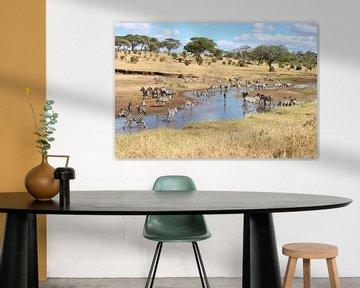 zebra's van Roger Hagelstein