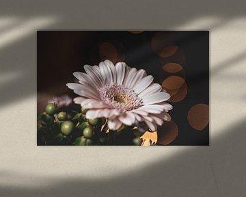 Blumen Teil 39 von Tania Perneel