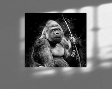 Tiere | Gorilla von Sylvana Portier