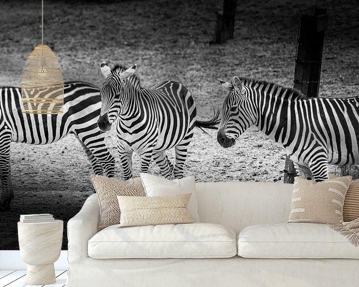 Beispiel fototapete: Tiere | Zebras von Sylvana Portier