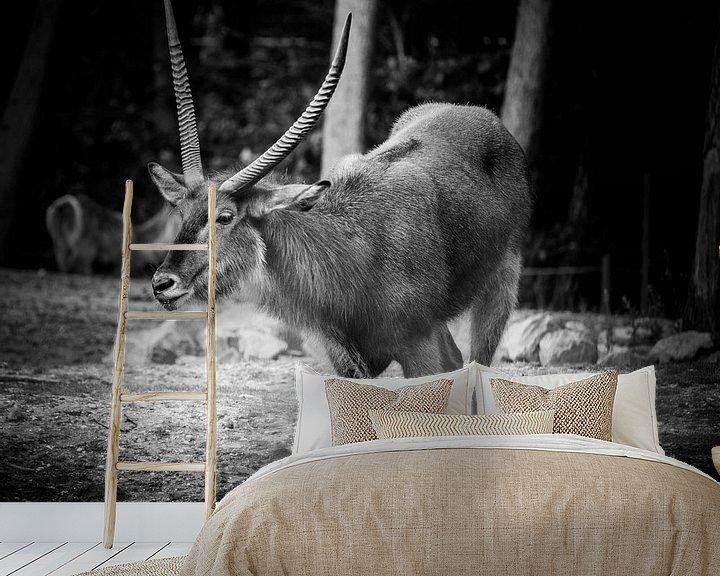 Beispiel fototapete: Tiere   Antilope von Sylvana Portier
