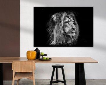 Tiere | Löwe von Sylvana Portier