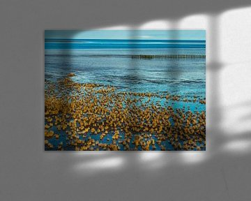 La mer des Wadden