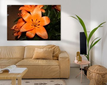 Orangenlilie von Rosalie Broerze