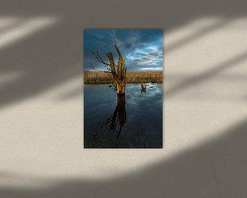 Verzonken boom van Floris van Woudenberg