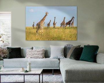 Une famille de girafes en Ouganda. sur Gunter Nuyts