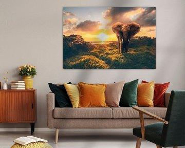 Olifant in zonsondergang, zonsopgang van Fotos by Jan Wehnert