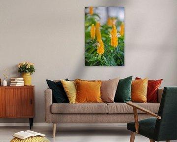 Gelbe Blumen in Costa Rica von Bianca Kramer
