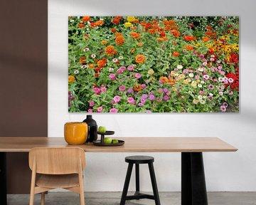 Blumenbeet mit verschiedenen Farben Zinnia's von Gert Bunt