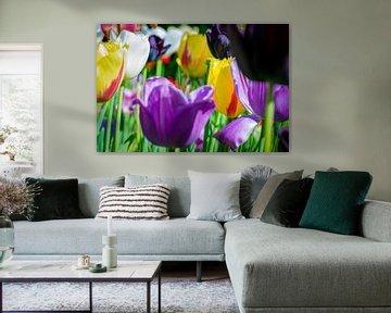 Tulpen geben Farbe von Remco de Jonge Photogaphy