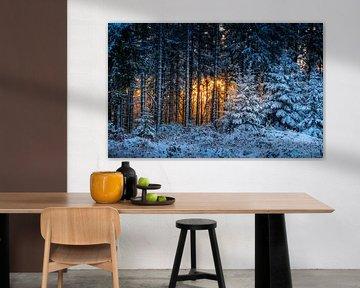 La forêt d'hiver en feu sur Peschen Photography