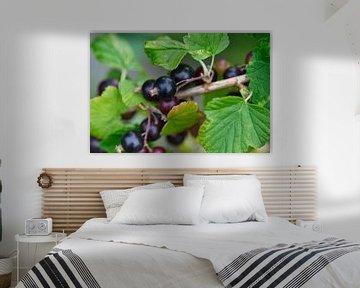 Schwarze Bio-Beeren am Strauch von J..M de Jong-Jansen